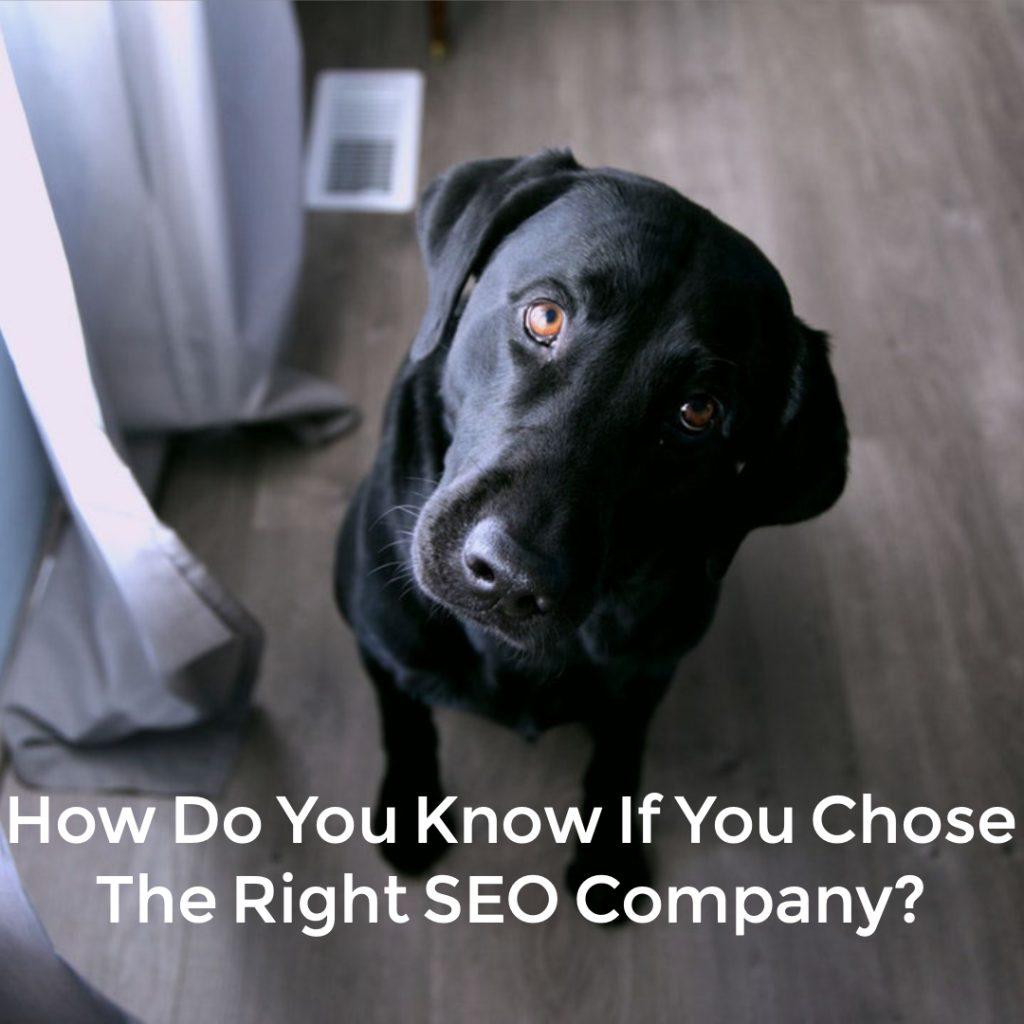 Choose The Right SEO Company